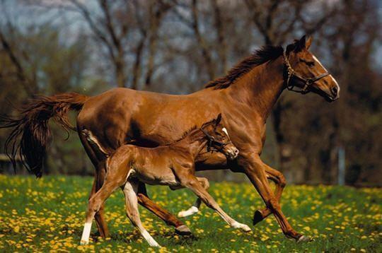 Sauver les chevaux sur poney academy jeu gratuit poneys pour petits et grands - Chevaux gratuits ...